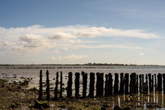 Wooden Beach Defences at Cudmore Grove Mersea. Aged and seaworn wooden sea barrier posts at low tide on Cudmore Grove East Mersea Island in Essex Engand Stock Photo