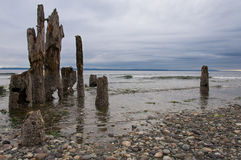 Wooden Beach. Beach of Picnic Point park. North Lynnwood, WA, USA Royalty Free Stock Images