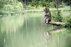 Wooden bear fishing by the lake Stock Images