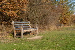 Wooden becnch japanese fall foliage. Autumn landscape with wooden bench and japanese fall foliage Stock Images