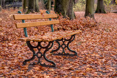 Wooden becnch japanese fall foliage. Autumn landscape with wooden bench and japanese fall foliage Royalty Free Stock Images