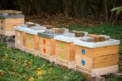 Wooden bee hives. Hives with bees stock image