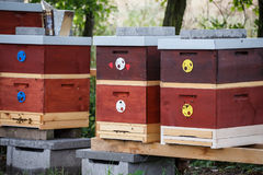 Wooden bee hives. Hives with bees royalty free stock photo