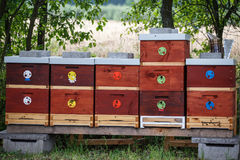 Wooden bee hives. Hives with bees stock photography