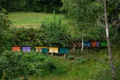 Wooden bee hives in the garden. Multicolored wooden bee hives in the garden stock photo
