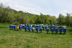 Wooden bee hives on green grass. Spring time royalty free stock images