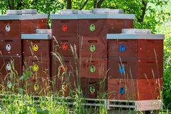 Wooden bee hives. Bee hives in nature. Beekeeping concept stock photos