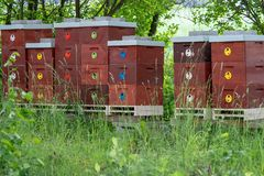 Wooden bee hives. Bee hives in nature. Beekeeping concept stock photography