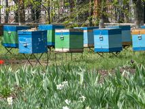 The wooden bee hives in spring garden. Vertical stackable frame hives.  stock images