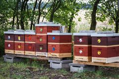 Wooden bee hives. Royalty Free Stock Image