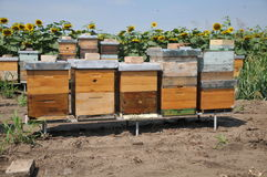 Wooden beehive. In sunflowers field Royalty Free Stock Photo