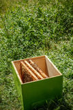 Wooden beehive Royalty Free Stock Image