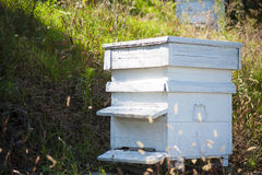 Wooden beehive. Wooden white beehives with active honey bees Royalty Free Stock Image