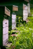 Wooden beehives. Row of wooden artificial beehives in garden stock images