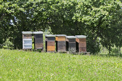 Wooden beehives on meadow Royalty Free Stock Image