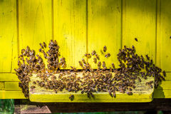 Wooden beehives in summer Royalty Free Stock Image