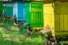 Wooden beehives in sunny day Stock Photo