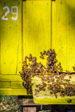 Wooden beehives in sunny day Stock Photography