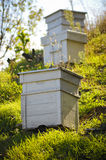 Wooden beehives. Wooden white beehives with active honey bees Royalty Free Stock Images