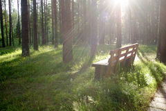 Wooden bench. Shined with the sun among high trees Royalty Free Stock Photography