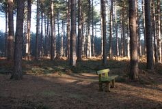 Wooden Bench. Royalty Free Stock Photography