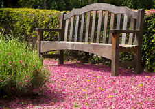 Wooden bench. Wooden park bench surrounded by pink blossom royalty free stock photos