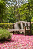 Wooden bench. Wooden park bench surrounded by pink blossom stock images