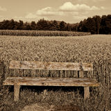 Wooden Bench. Against the Background of Wheat and Corn Fields in Germany, Retro Image Filtered Style Royalty Free Stock Images