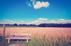 Wooden Bench. Against the Background of Wheat, Instagram Effect Royalty Free Stock Images