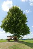 Wooden bench against a tree. An old wooden bench standing in front of a deciduous tree Stock Photo