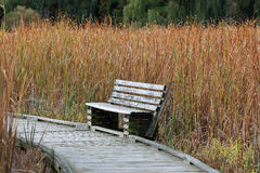 Wooden bench along a boardwalk in a marsh Royalty Free Stock Photography