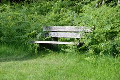 Wooden bench amongst greenery Royalty Free Stock Photos