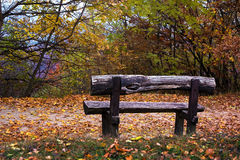 Wooden bench in an autumn forest. Wooden bench in a colorful autumn forest Royalty Free Stock Image