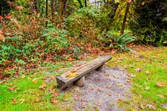 wooden bench in an autumn forest, with brown fallen leaves, green grass, stock photo