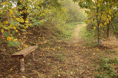 Wooden bench in autumn forest. Wooden bench by a pathway through autumnal forest Stock Photography