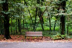 A wooden bench and autumn leaves near of green trees royalty free stock photography