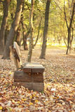 Wooden bench. In autumn park. Adica in Vukovar stock images