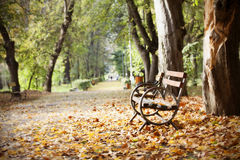 Wooden bench in autumn park Royalty Free Stock Photos