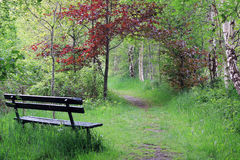 Wooden bench in beautiful open spot in forest in spring, paradise Royalty Free Stock Image