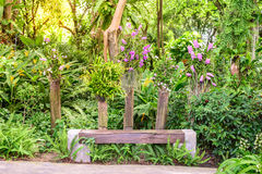 Wooden bench among the beautiful orchid garden Stock Photos