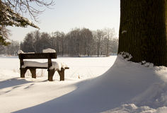 Wooden bench and big tree Stock Image