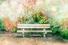 Wooden bench at blossom bushes in spring or summer park or garden. Outdoor nature Stock Photography