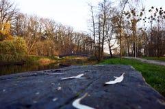 Wooden bench and bridge in autumn park. Wooden bench and bridge among autumn scenery in park. Late Polish fall, naked trees. Horizontal Stock Photos