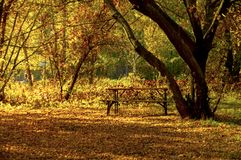 Wooden bench in a deserted autumn park stock image