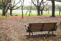 Wooden bench dried leaves in autumn park Royalty Free Stock Photography