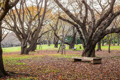 Wooden bench dried leaves in autumn park Stock Image