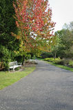 Wooden bench in empty garden path Stock Photos