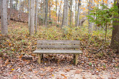 Wooden bench. Empty wooden bench in the quiet park during fall season Stock Photo