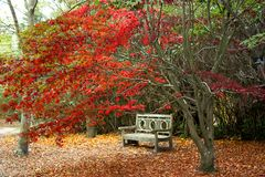 Wooden bench in fall foliage royalty free stock photo