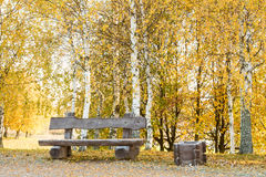 Wooden bench among fallen leaves. Autumn yellow birch trees grove among fallen leaves in the park with bench Stock Photos